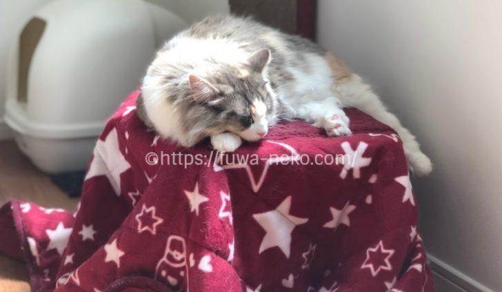 猫用コタツの上で寝る猫