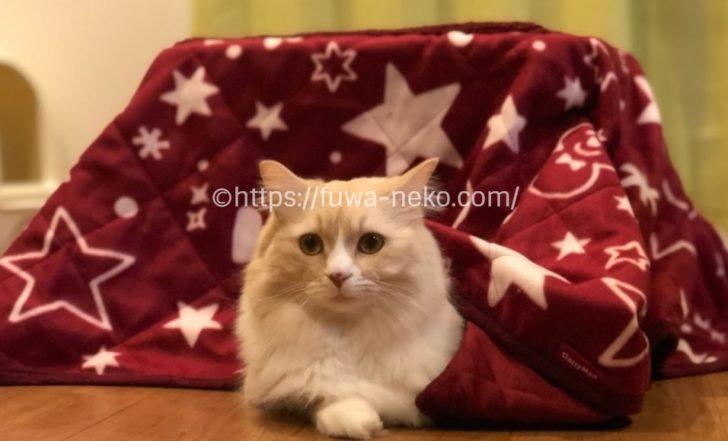 猫用コタツを使用する猫
